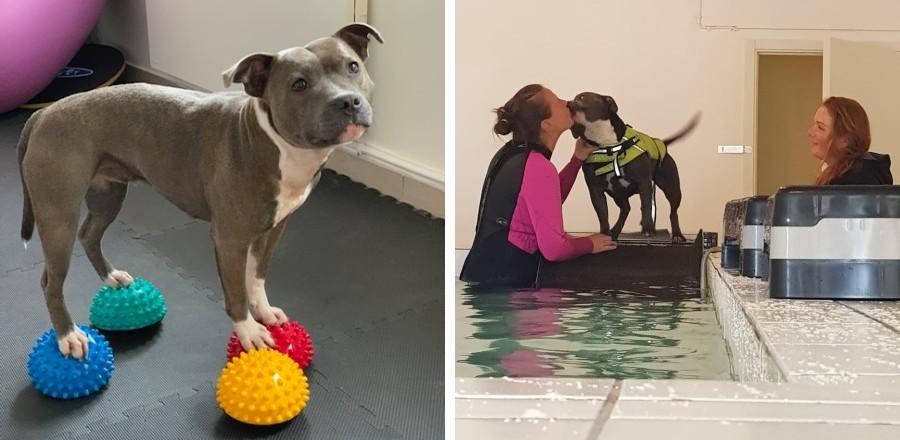 kollage-hund-som-gör-balansövning-samt-hund-som-simmar